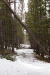 Trail Well Traveled – 1/20