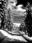 Trail Well Traveled – 12/29