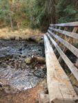 Trail Well Traveled – 12/28