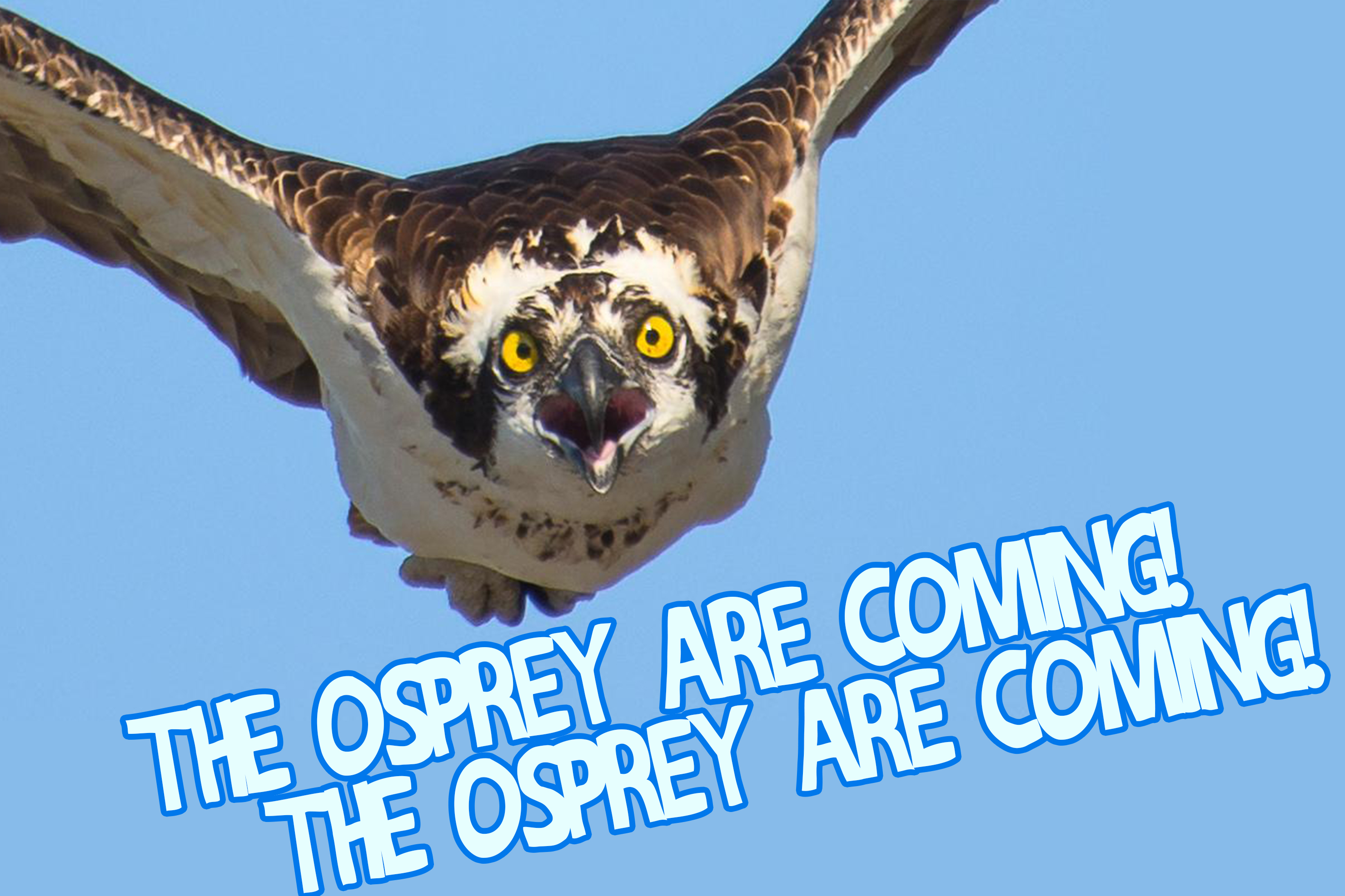 Osprey tix on sale Saturday!